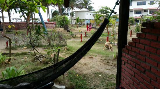 Cocosolo Lodge : Vista de los jardines y piscina