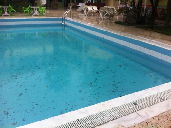 Artemis Yoruk Hotel : Mosquito breeding site