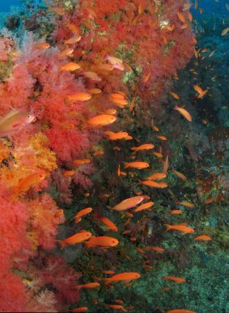 美人魚度假村和潛水中心照片