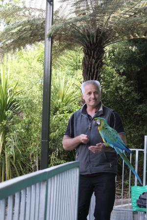 Rainbow Springs Nature Park: Mark Head Bird Trainer
