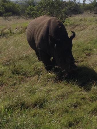 Schotia Tooth and Claw Safari : Rhino