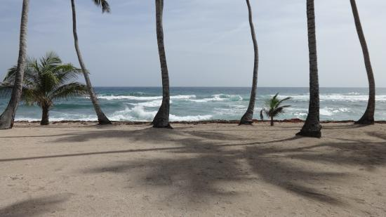 Albatros Club Resort: Beach front