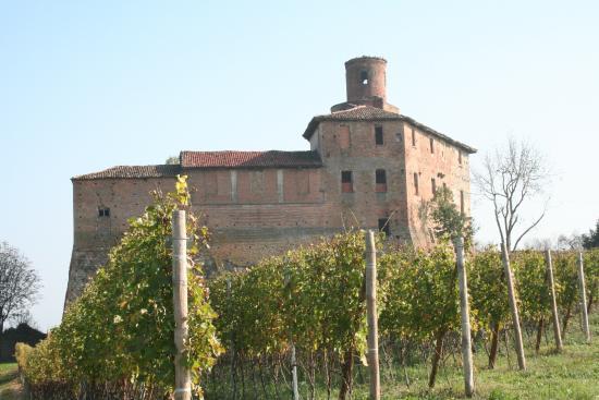 Barolo, Italy: tra le vigne