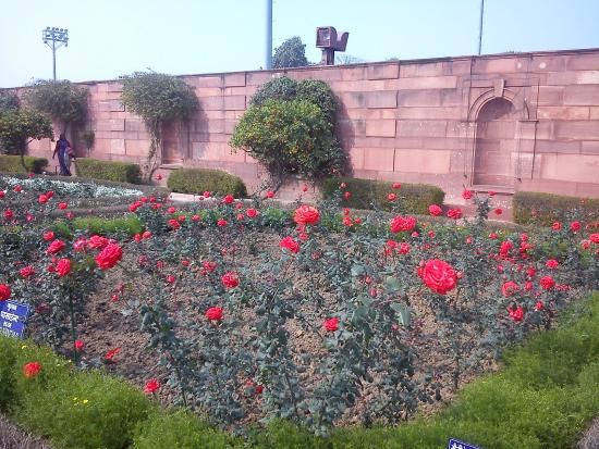 Variety Of Roses Picture Of Mughal Garden New Delhi