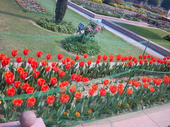 Tulips picture of mughal garden new delhi tripadvisor Mughal garden booking