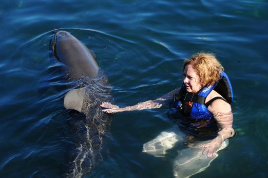 Delphinus Punta Cancun: Touching the dolphin