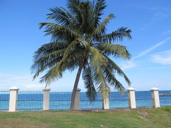 Cancun Golf Club at Pok-Ta-Pok: Green on the ocean