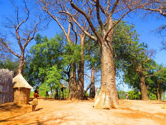 Kongola, Namibia: The museum is situated under old baobab trees.