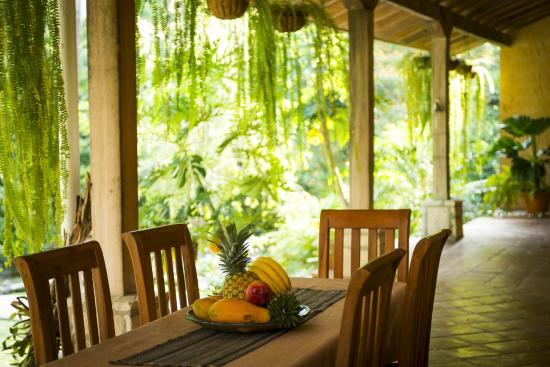 La Villa de Soledad B&B: our breakfast area offers outstanding views to the jungle!