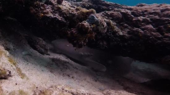 Datura Avenue Shipwreck Snorkel Trail