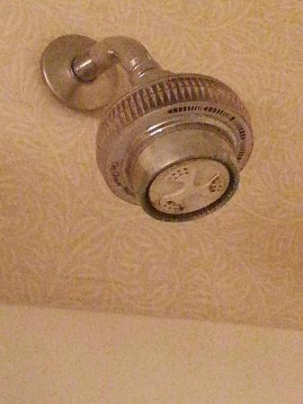 Sturbridge Host Hotel & Conference Center: rusted shower head