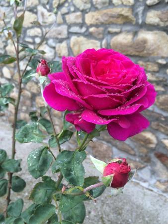 La Piana dei Castagni: Roses beside the house.