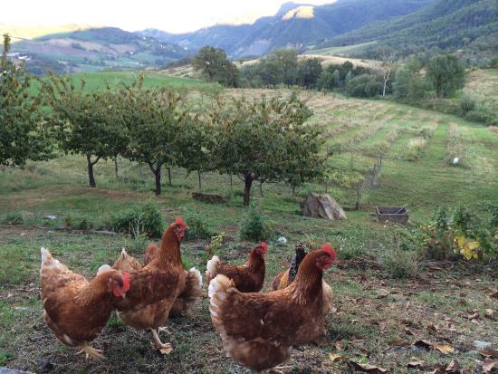 La Piana dei Castagni: Chicken.