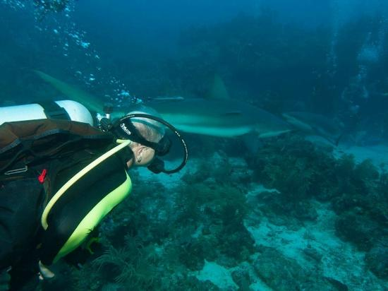 Roatan Shark Dive: October 30, 2014
