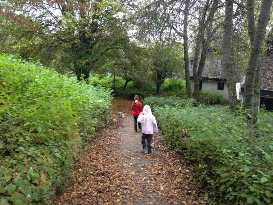 Roompot Parks- Ferienpark Hambachtal : Leuke bos paden in het park