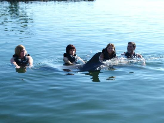 Dolphin Cove Cayman: Petting Nemo