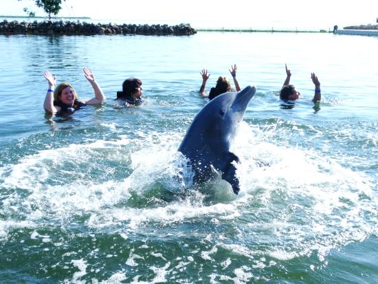 Dolphin Cove Cayman: Dancing with Nemo