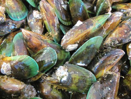 TIME Unlimited Tours: Green lipped mussel at the Auckland Fish Market