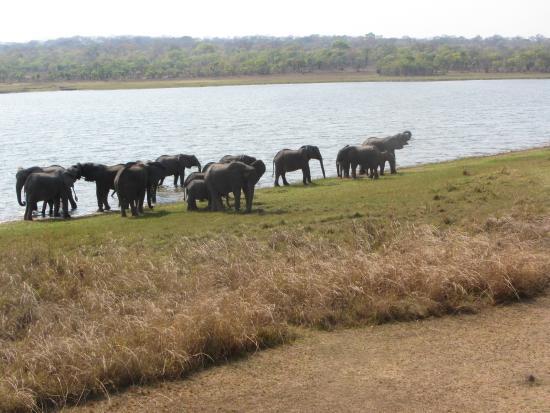 Lifupa Conservation Lodge: visitors !