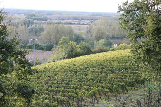 Loupiac, Francja: la nature