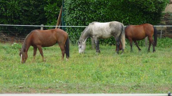 Clem Horse