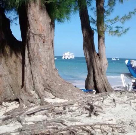 whala!bavaro: Playa muy relax