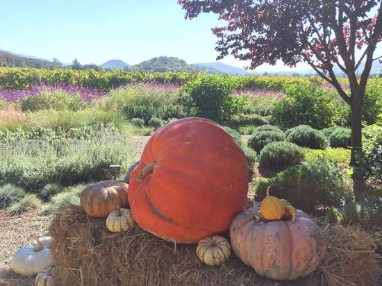 Paraduxx Winery: Beautiful fall morning at Paraduxx!