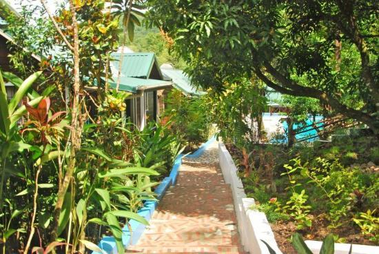 JJ's Paradise Hotel: Grounds
