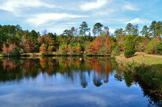 Clemmons Educational State Forest: Fall Foliage on Pond