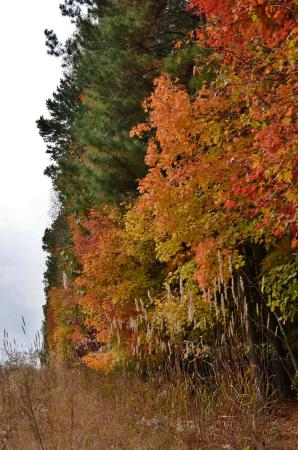 Clemmons Educational State Forest: Fall Foliage along Powerline Clearing