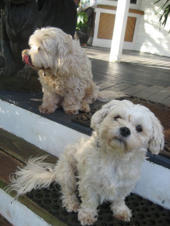 Willow Lodge: Bella and Mr Magoo