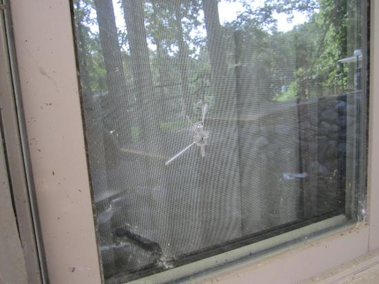 Kenlake State & Resort Park: Bullet hole in window