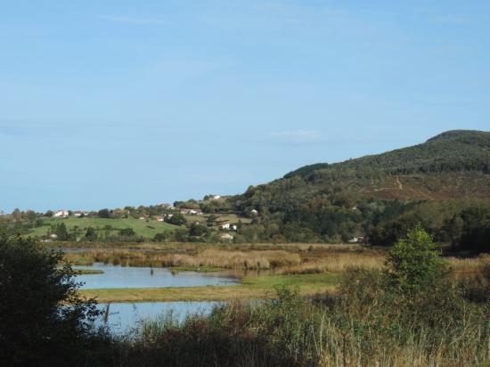 Urdaibai Bird Center: Laguna de Urdaibai