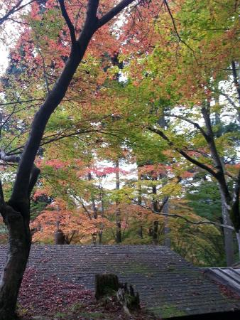 Jingoji Temple: 早めの紅葉が楽しめます。