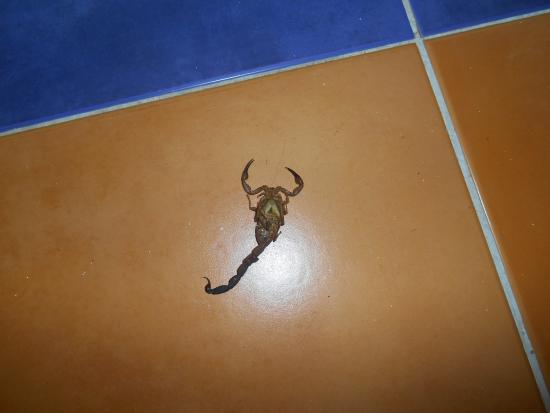 Sol Cayo Santa Maria : scorpion dans notre chambre