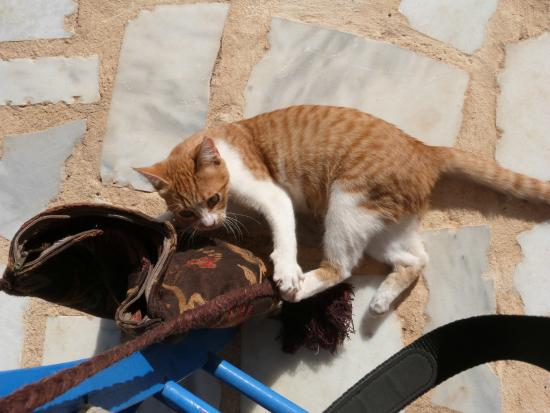 Vista del Mar Bungalows : Four cats roamed the grounds and joined us for meals!