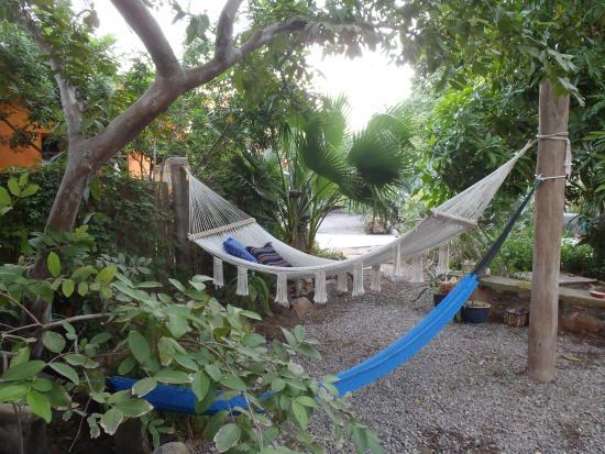 La Damiana Inn : Hammock in the garden