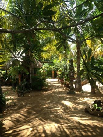 Villa Mozart y Macondo: Jardin