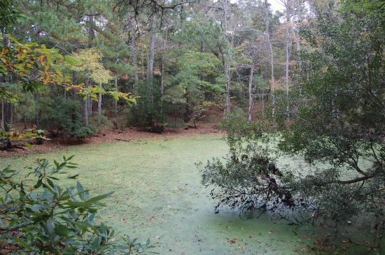 Nags Head Woods Ecological Preserve: A quiet still water pond.