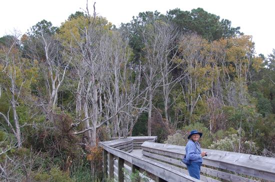 Nags Head Woods Ecological Preserve: On the ADA compliant walk around a pond