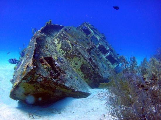 Sharky Dive Shop: El Velerito