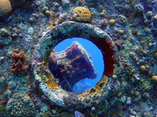 Sharky Dive Shop: Naufragio
