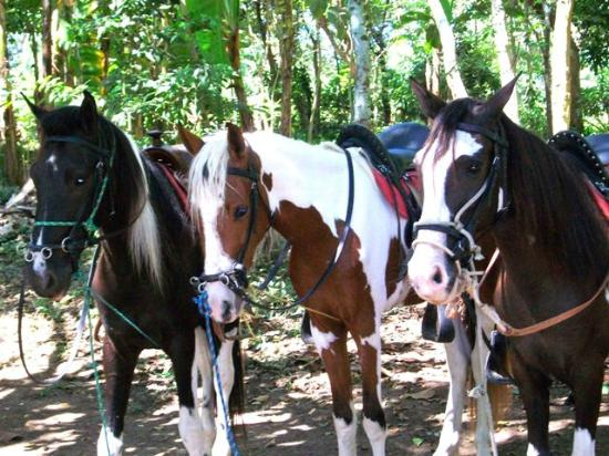 Painted Pony Horse Tours: Painted Ponies
