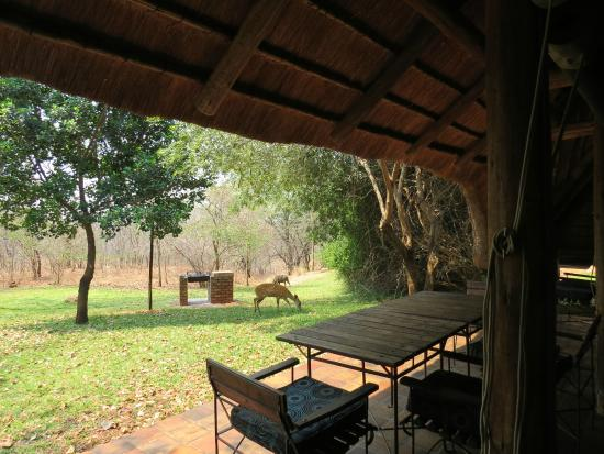 Lokuthula Lodges: View from sitting area