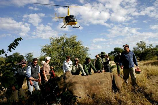 باوباب ريدج برايفت لودج: Rhino conservation