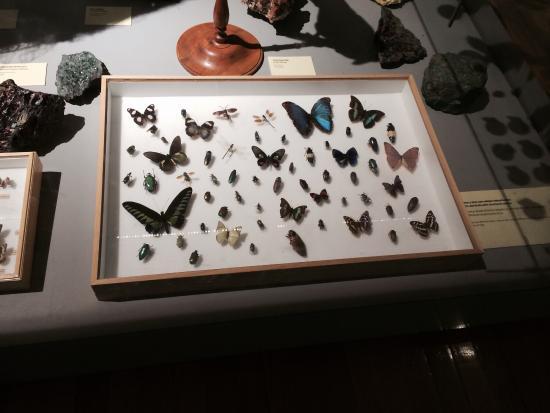 Museo Nacional de Ciencias Naturales: Mariposas