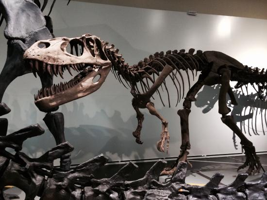 Museo Nacional de Ciencias Naturales: For my 5y/o sons, the dinosaurs were the highlight of the visit. My husband and I loved them too