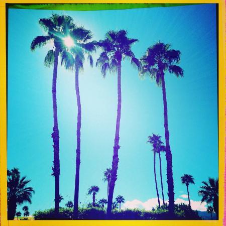 La Dolce Vita Resort & Spa : Palm view