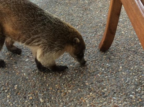 Almond Tree Hotel Resort: Rocky's morning  visit