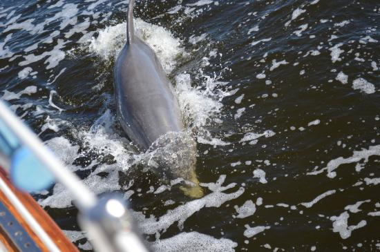 FantaSea Sailing: Hello Dolphin